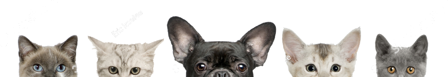 stock-photo-cropped-view-of-dog-head-and-cat-heads-in-front-of-white-background-studio-shot-37084576_masked